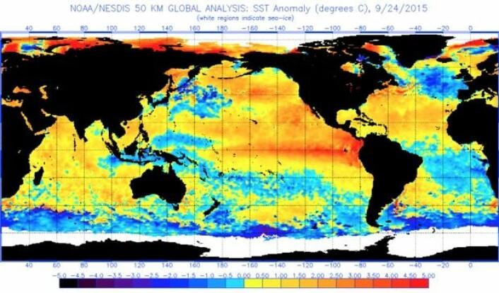 Slik var havoverflatetemperaturen (avvik fra normalen) rundt om på kloden vår denne uken. (Bilde: NOAA)