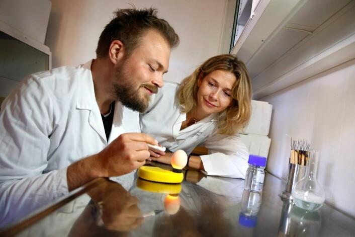 Hedvig Nordeng sammen med Lars Engeset Austdal som undersøker hvordan legemidler, som for eksempel paracetamol, påvirker utviklingen til kyllingfoster. Slike studier bidrar til at de kan finne de biologiske mekanismene bak utviklingsforstyrrelser de har sett hos barn som følge av mors bruk av medisiner under svangerskapet.  ( Foto: Terje Heiestad, Millimeterpress)