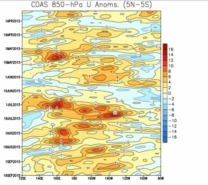Fortsatt litt vestlig vind-anomali i Stillehavet, men når kommer det neste store vestavindsutbruddet (rødt)? Vil denne El Ninjoen gå tom i høst, eller styrke seg? (Bilde: NOAA)
