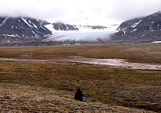 Warmer winters in Svalbard are not good for plants