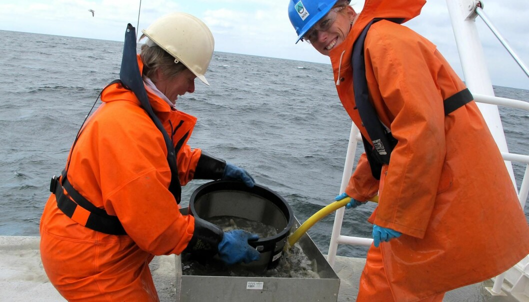 Along the Norwegian coast to the Skagerrak, researchers from NIVA investigated the fauna at the soft bottom and measured environmental variables like temperature, salinity and nutrients for 20 years. They revealed that climate related factors and changes in nutrient levels affected the species composition the most.