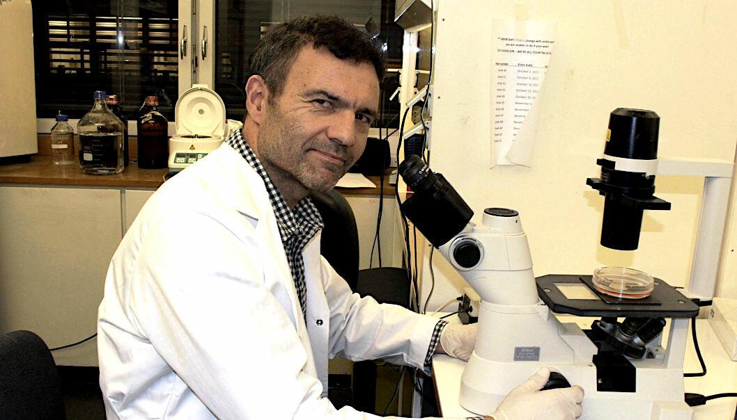 Professor Fahri Saatcioglu is already planning clinical trials on humans. (Photo: Bjarne Røsjø)