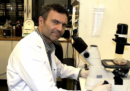Norwegian researchers find new treatment for prostate cancer
