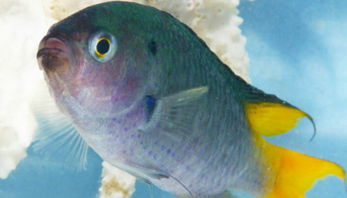 CO2 is confusing fish