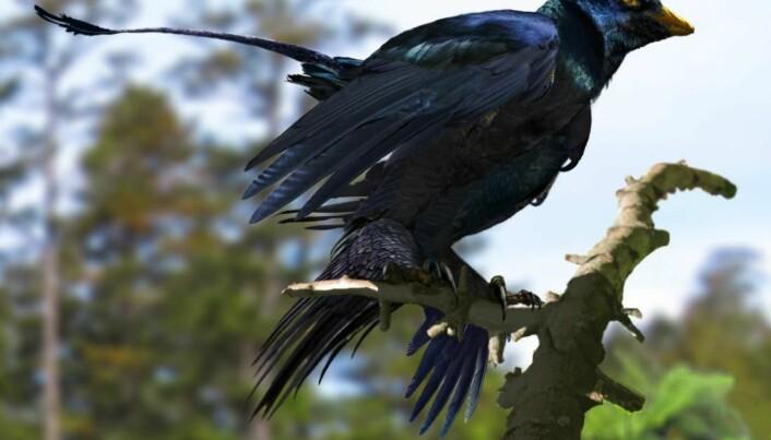 Sex made birds spread their wings