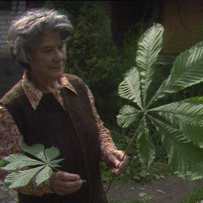 Året etter atomulykken vokste planter ut av normale dimensjoner. (Foto: Svein Bæren, NRK)