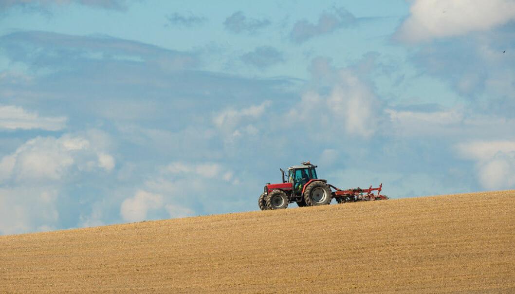 Norske bønder må bli meir produktive i framtida, men dei må også bli færre, spår økonomar ved NIBIO. (Foto: E. Fløistad, NIBIO)
