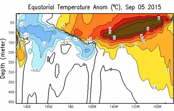 Det nyeste plottet fra NOAA om varmefordelingen (avvik fra normalen) rett under overflaten ved ekvatorbeltet i Stillehavet. (Bilde: NOAA)