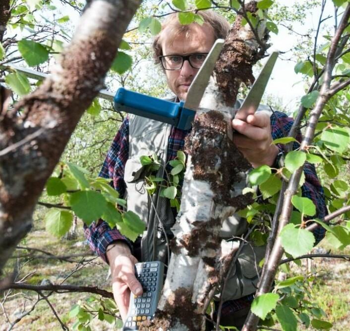 Alle trær over fem centimeter i diameter blir registrert og målt. Alle data registreres på en liten felt-pc og tallene overføres til en server på Ås etter endt arbeidsdag. (Foto: Lars Sandved Dalen, Nibio)