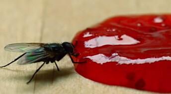 Øyeblikket: Slik lurer flua deg