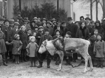 """""""Trygve Danielsen with reindeer in Odense, circa 1933"""" (Source: private photo)"""