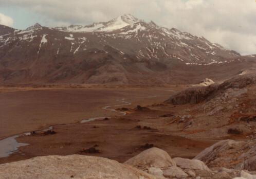 Alien reindeer thrive in the Antarctic