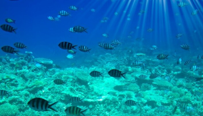 New method measures CO2 production of sub-seabed bacteria