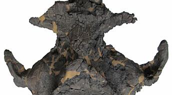 Fossil av ukjent hval funnet i Danmark