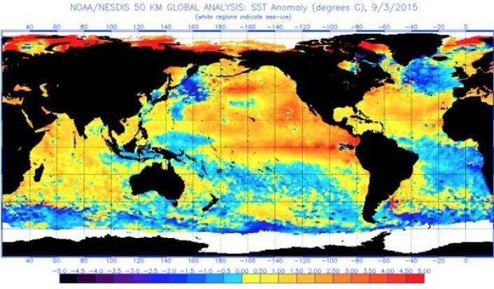 Satellittmålt temperaturavvik i havoverflaten 3. september. (Bilde: NOAA)