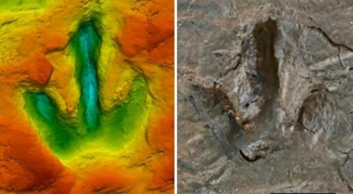 Tolker dinosaurers ganglag i sporene