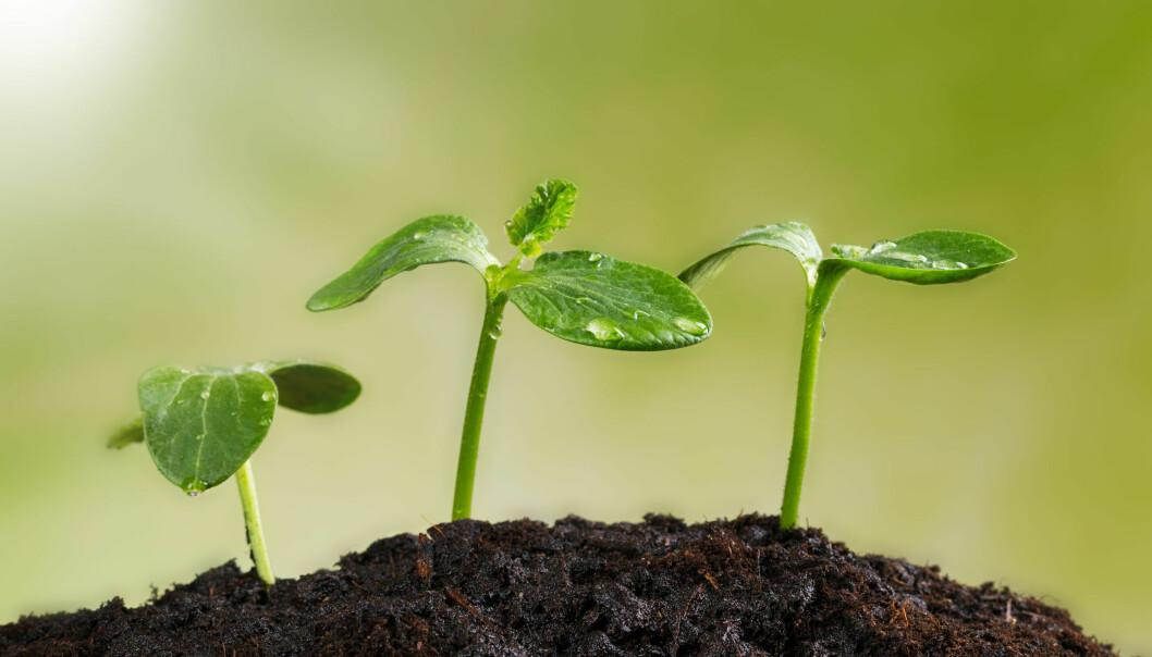 – Vi fant ut at når vi tar med klima i beregningene, kan biologisk mangfold under jorden være like viktig som biologisk mangfold over jorden, forteller en av forskerne bak den nye studien.  (Illustrasjonsfoto: Microstock)