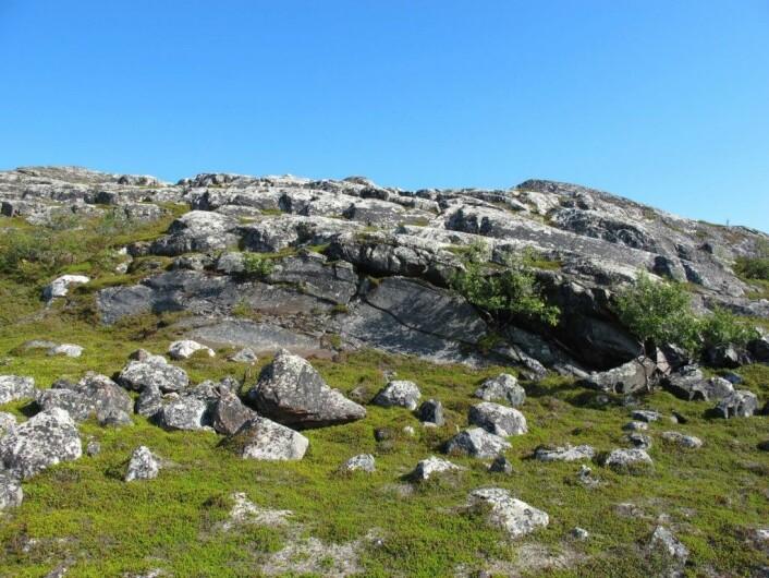Helleristningene ligger på den flate bergveggen, som måler ca 15 meter i bredde og inntil 3 m i høyde.  (Foto: (Foto Anja Roth Niemi))