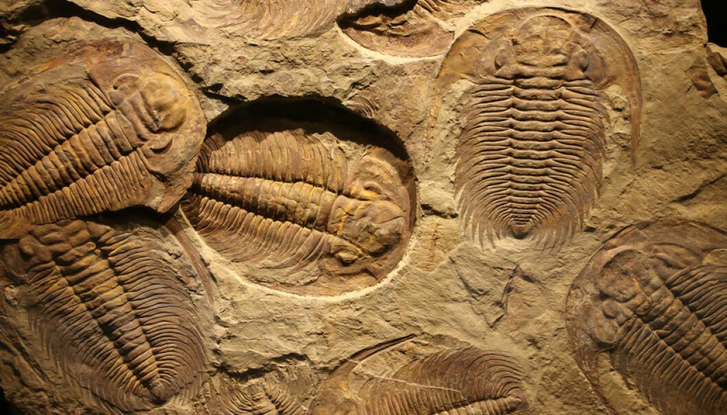 Trilobittene levde i havet i over 270 millioner år. (Illustrasjonsfoto: Microstock)