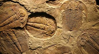 Fossil-mysterium utfordrer Darwin