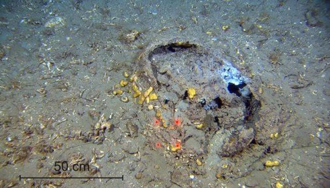 Matter med bakterier på havbunnen