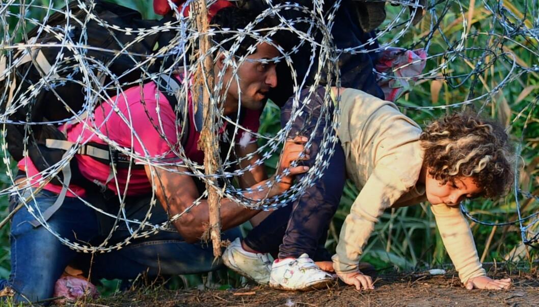 En ung syrisk jente blir hjulpet av faren sin gjennom piggtrådgjerdet Ungarn nå setter opp for å forsøke å stanse strømmen av flyktninger inn i landet.  (Foto: Attila Kisbenedek / AFP-NTB)