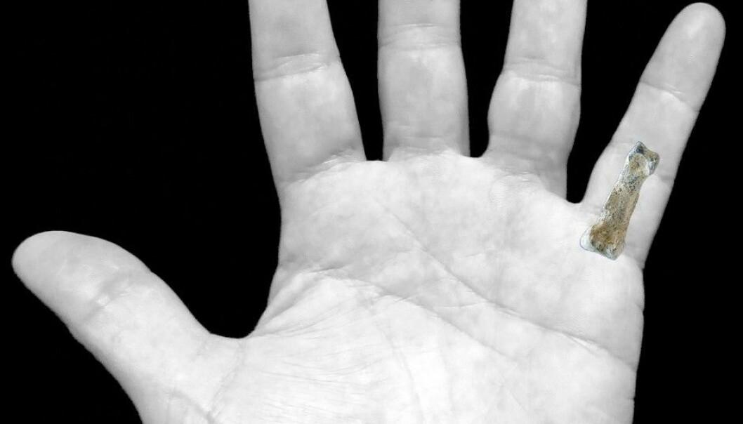 Dette kan være verdens hittil eldste finger fra et fortidsmenneske