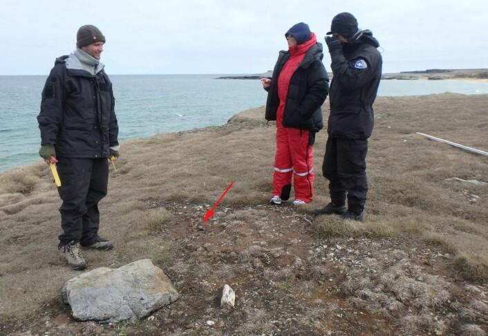Tora, Snorre og Arild står i en tuft som vi enda ikke hadde klart å tolke opprinnelsen av. Funnsted for ikon er markert med rød pil.  (Foto: Dag Nævestad/Sysselmannen på Svalbard.)