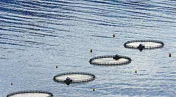 Er lakseoppdrett dyremishandling eller løsning på verdens matproblem?