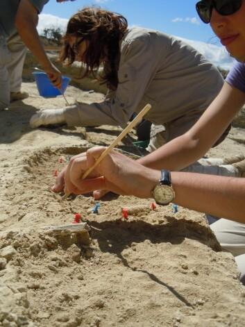 Arkeologene graver i Olduvai-dalen i Tanzania, der fingerbiten ble funnet. Feltet ble oppdaget i 2012. (Foto: Manuel Domínguez-Rodrigo)