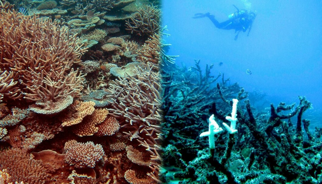 Biletet til venstre viser eit sunt korallrev ved Heron Island, mens den høgre sida viser eit øydelagt rev utanfor Townsville. Begge korallreva utgjer ein del av The Great Barrier Reef. (Foto: Ove Hoegh-Guldberg, Global Change Institute at the University of Queensland)