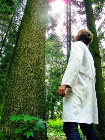 «Hemicellulose», som finnes sammen med cellulose i planter og trær, burde hete «semicellulose», mener Fredrisen. (Foto: Kai Tilley)
