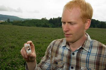 Sondre Dahle har fanget en av jordhumlene som er satt ut og fått den på glass for å sjekke den. (Foto: Georg Mathisen)