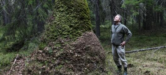Hvorfor blir noen maurtuer store mens andre blir små?