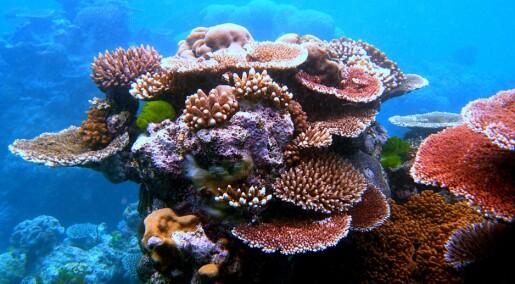 Hør lyden av et korallrev