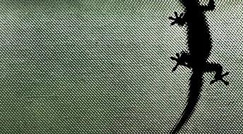 NASA vil herme etter gekkoens grep
