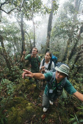 Botanikerne Merlijn Jocqué (Rutgers University, USA), Rachel Schwallier (Naturalis Biodiversity Center, Nederland) og Sukaibin Sumail (Sabah Parks, Malaysia) i tåkeskogen ved toppen av Mount Kinabalu i 2012. (Foto: Joris van Alphen)