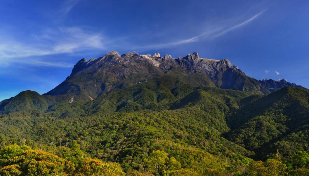 Mount Kinabalu ligger i den malaysiske delen av øya Borneo. Fjellet er på UNESCOs verdensarvliste på grunn av sitt særegne livsmangfold. (Foto: John Kong / Sabah Parks)