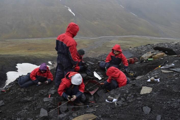 Vi raker Nedre Saurie. Det viser seg at å rake fjellsider er svært effektivt for å få knokler til å bokstavelig talt sprette frem. (Foto: Victoria Engelschøn Nash)