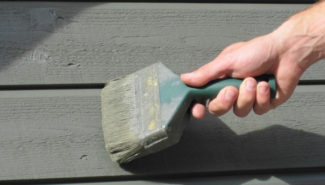 Å velge maling av god kvalitet er viktig for å unngå svertesopper. (Foto: Lone Ross Gobakken, Nibio)