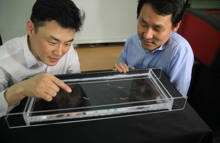 To av forskerne som har laget roboten, sørkoreanske Ho-Young Kim til venstre og Kyu-Jin Cho til høyre. (Foto: Seoul National University)