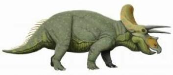 Triceratops var en stor, planteetende dinosaur som levde for omkring 68 millioner år siden. Ifølge den engelske skolen av paleontologer er triceratops en fugl.