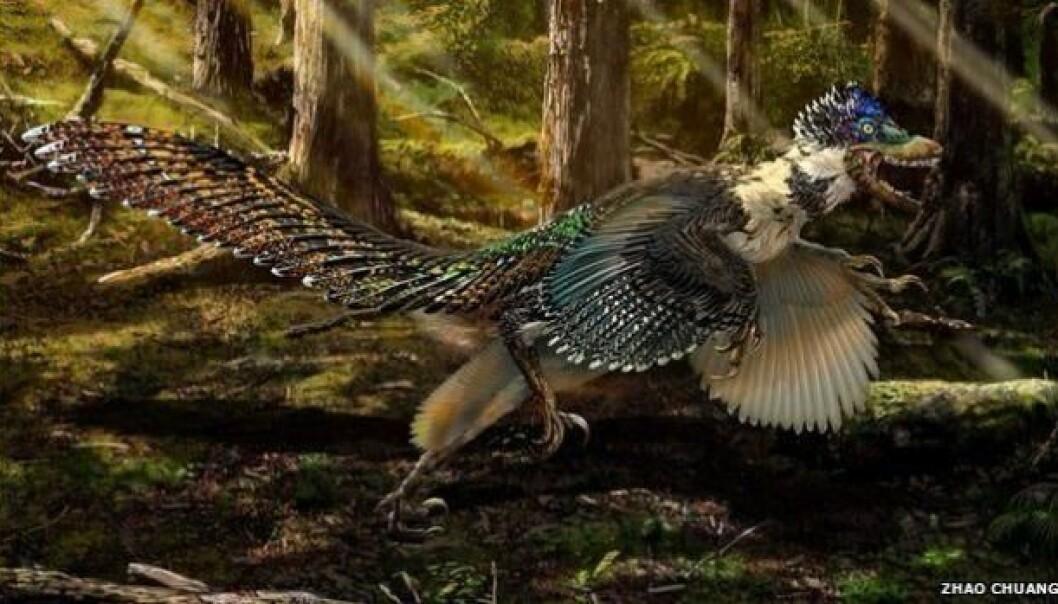 Zhenyuanlong var to meter høy, hadde fjær og vinger. Med størrelsen tyder på at den ikke kunne fly.  (Illustr: Zhao Chuang)