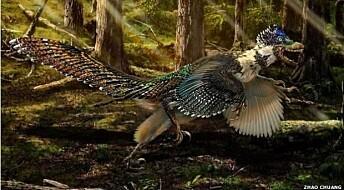 Tror dinosaurer glemte hvordan de kunne fly