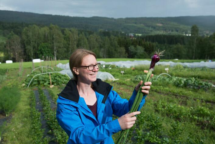 Anne Strøm Prestvik fant en ekstra fristende rødløk blant grønnsakene på Sø-Strøm gård i Nittedal. (Foto: Erling Fløistad)