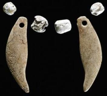 Med seg i graven hadde gaupa en halskjede med skjell og utskjæringer som skulle forestille bjørnetenner.  (Foto: Kenneth Farnsworth)