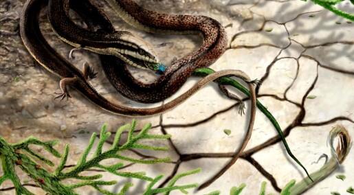 En slange med fire bein