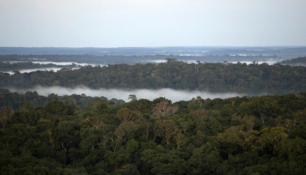 Det bodde millioner i Amazonas før europeerne kom