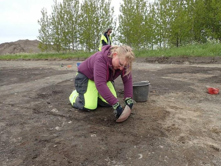 Lisa Mariann Strand graver ut kulturlag med bein.  Foto: Ingrid Ystgaard, NTNU.