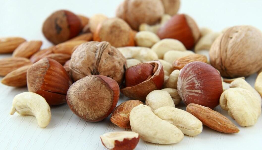 Når forskerne tok det vanlige nøttestoffet i rendyrket form og testet det ut i behandlingsmetoden sin, viste det seg virkningsfullt på mus med kreftspredning til hjernen. Stoffet finnes for eksempel i hasselnøtter, pistasjnøtter, peanøtter, mandler, cashewnøtter og valnøtter. Det betyr altså ikke at det å spise disse nøttene kan hjelpe mot kreft med spredning til hjernen. (Foto: Colourbox)